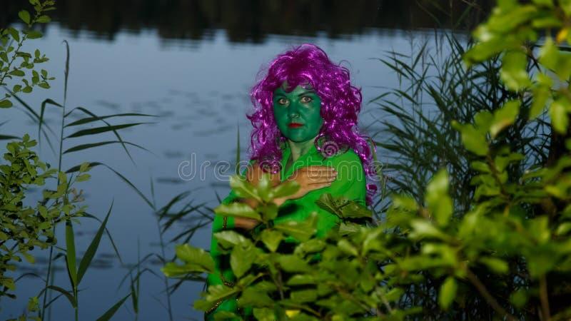 Zielona wodna czarownica w nabrzeżnych gąszczach przeciw tłu jezioro zdjęcie royalty free