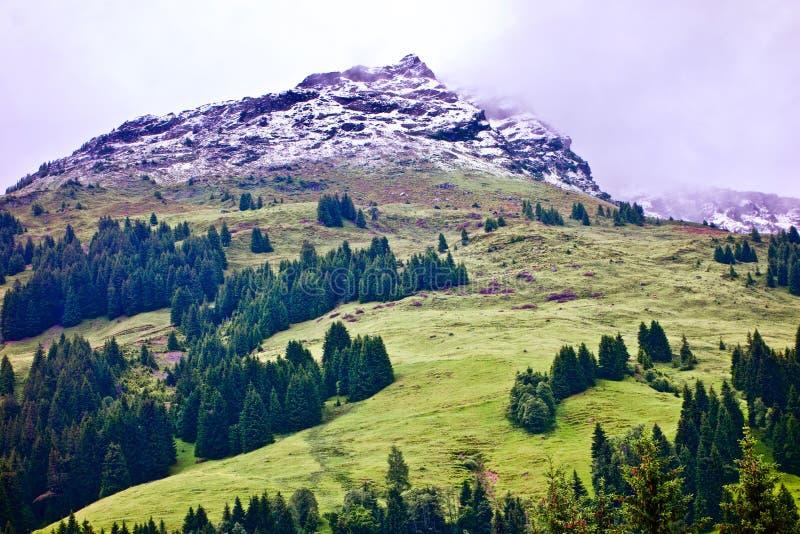 Zielona wysokogórska góra z śnieżnym szczytem pod mgłowym niebem przy Talschluï ¿ ½ w Saalbach, Austria obraz royalty free