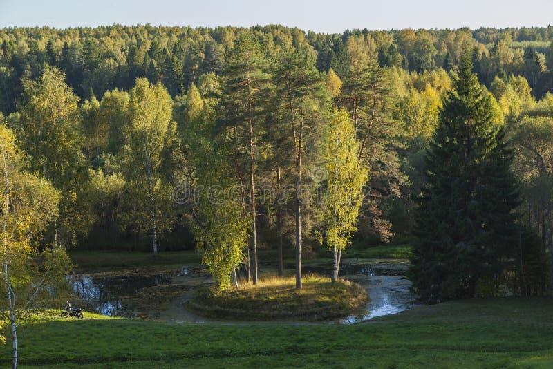 Zielona wyspa lasu rzeka obrazy stock