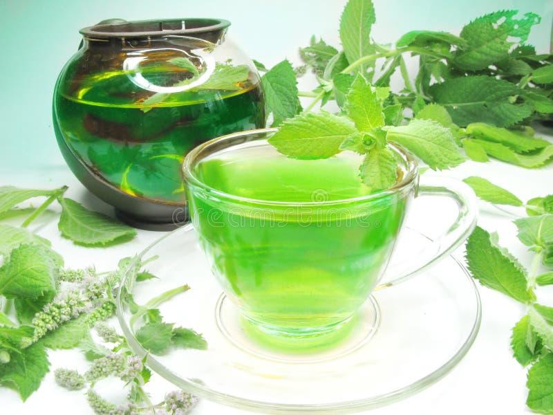 zielona ziołowa nowa herbata fotografia stock