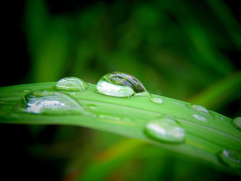 zielona zrzutu liść wody obraz stock