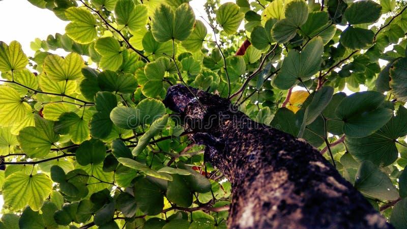 Zielonawy drzewo Po deszczu obraz stock