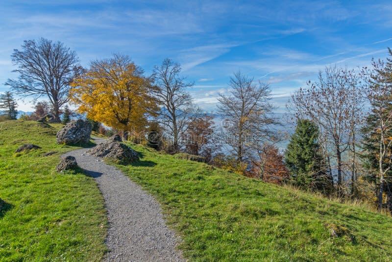 Zielone łąki nad jezioro lucerna blisko góry Rigi, Alps, Szwajcaria obraz stock