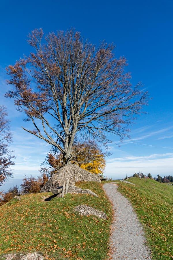 Zielone łąki nad jezioro lucerna blisko góry Rigi, Alps, Szwajcaria obrazy royalty free