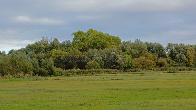 Zielone łąki z drzewami i krzakami w jesień kolorach na chmurnym w flemish wsi zdjęcie royalty free