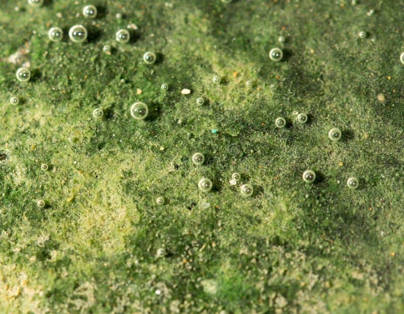 Zielone algi na metalu pod wodą zdjęcie stock