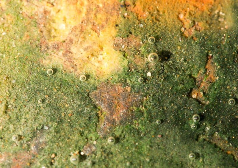 Zielone algi na metalu pod wodą obraz stock