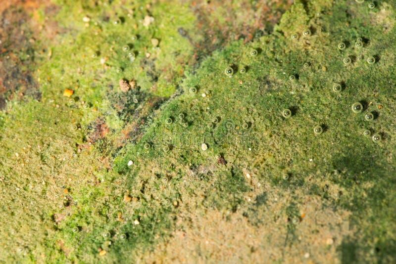 Zielone algi na metalu pod wodą obraz royalty free
