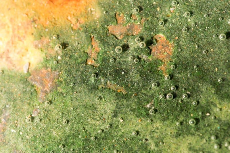 Zielone algi na metalu pod wodą obrazy royalty free