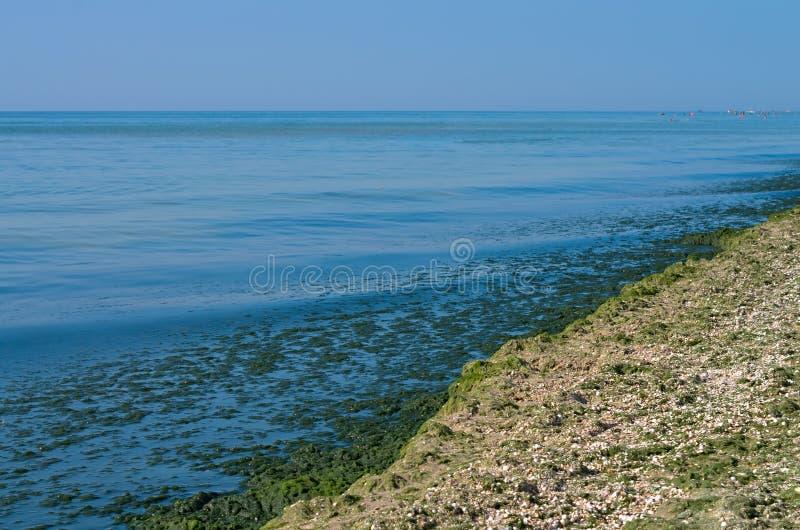 Zielone algi na morze plaży fotografia stock