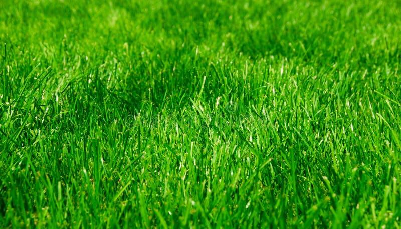 zielone bujny trawy fotografia royalty free