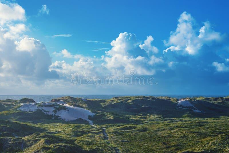 Zielone diuny przy słonecznym dniem przy morzem północnym w Dani zdjęcia royalty free