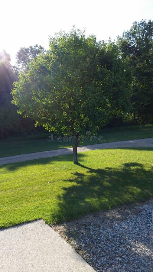 zielone drzewa obrazy stock