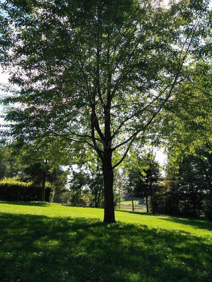 zielone drzewa zdjęcie royalty free