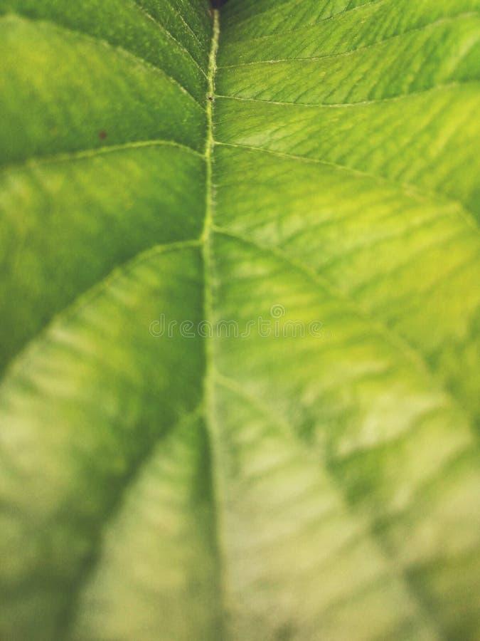 zielone drzewa zdjęcia royalty free