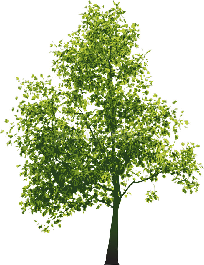 zielone drzewa wektora royalty ilustracja