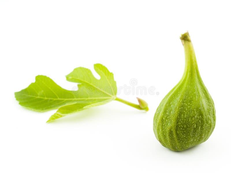 zielone figi fotografia royalty free