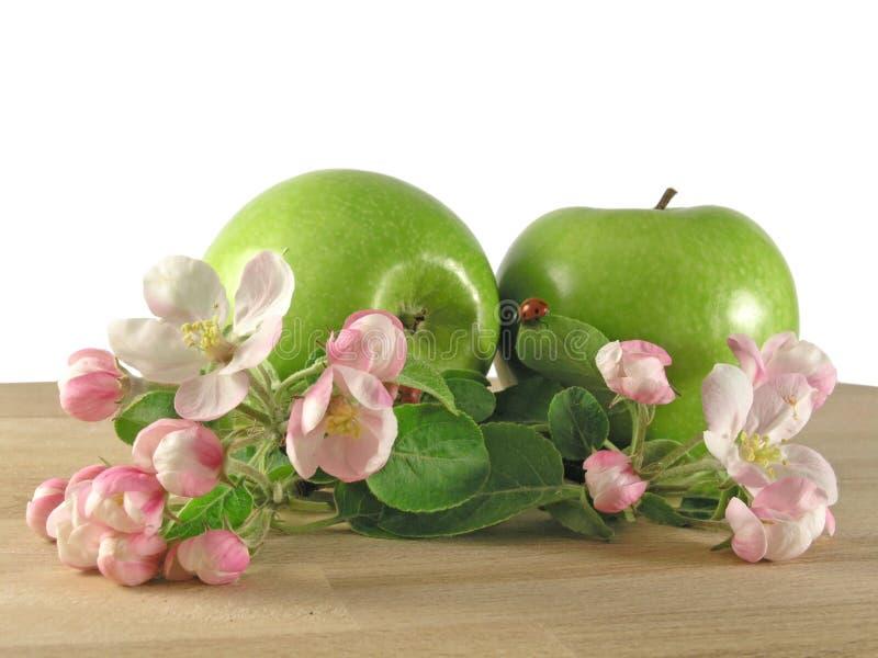 zielone jabłka obrazy stock