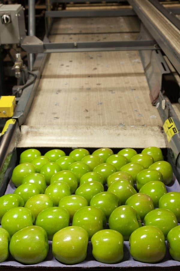 Zielone jabłka w magazynie opakowań owocowych zdjęcie royalty free