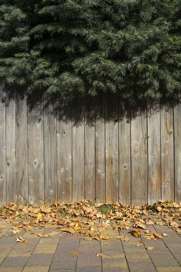 Zielone jodeł gałąź i drewniana ściana obrazy royalty free