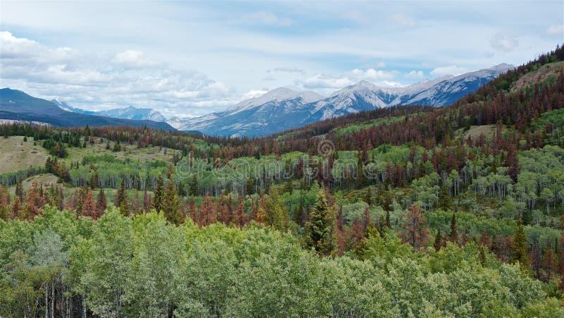Zielone lasowe i śnieżne góry obraz royalty free