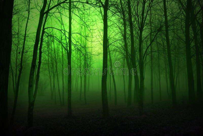 Zielone lasu