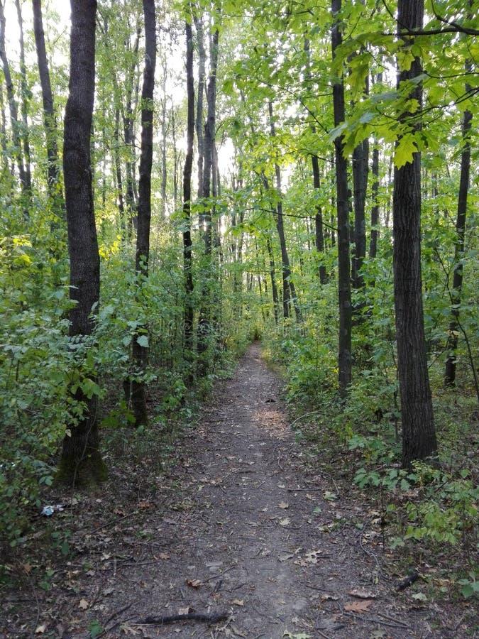 zielone leśną road zdjęcie royalty free
