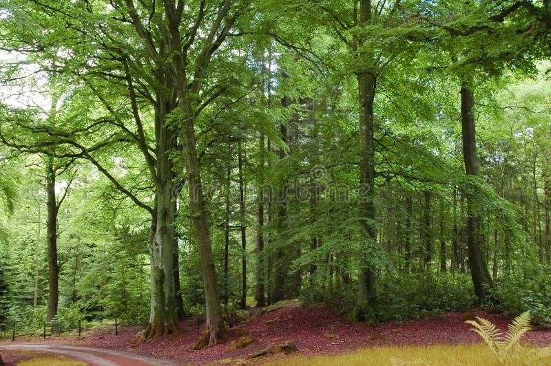 zielone leśną road fotografia stock