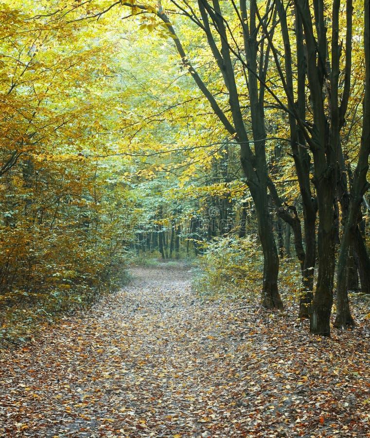 zielone leśną road obrazy stock