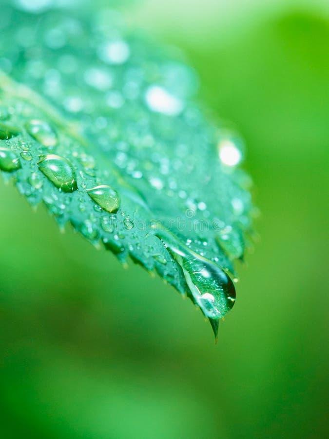 zielone liści, zdjęcie stock