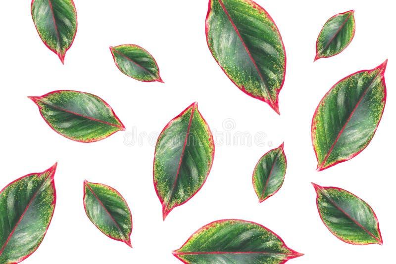 zielone liści białe tło obraz royalty free