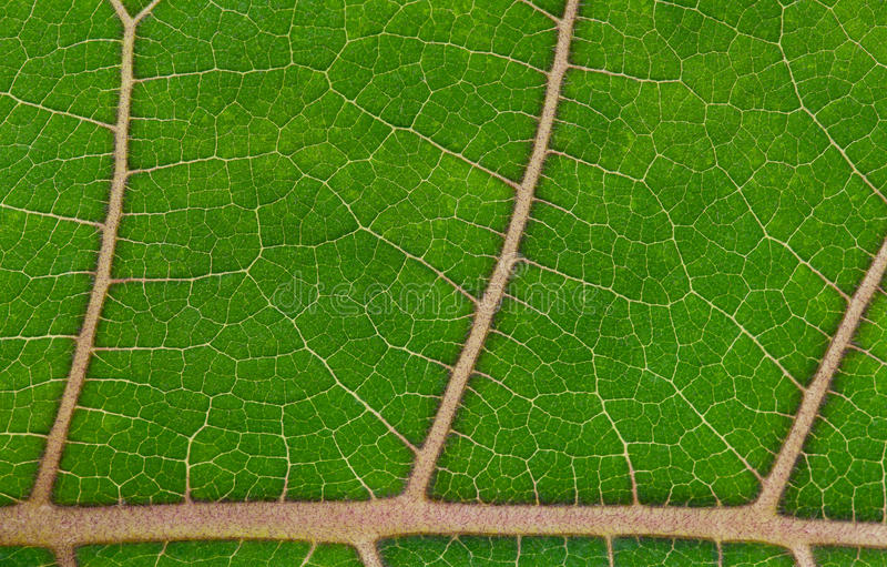 - zielone liści bright zdjęcie royalty free