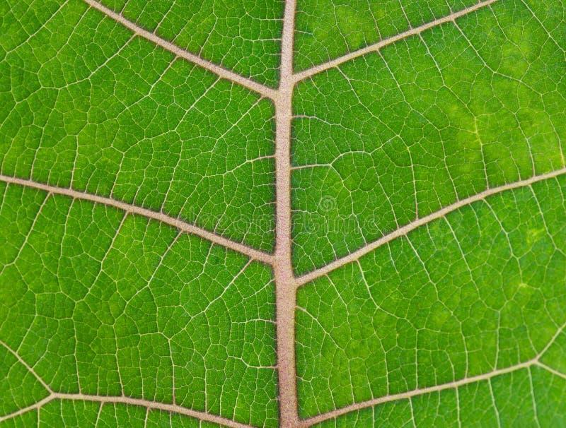 - zielone liści bright fotografia stock