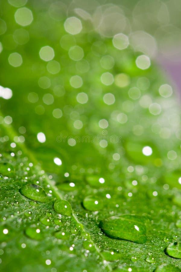 zielone liści mokre obrazy stock