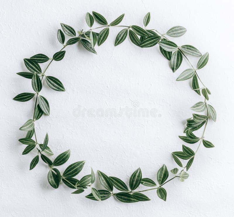 zielone liście obrazy royalty free