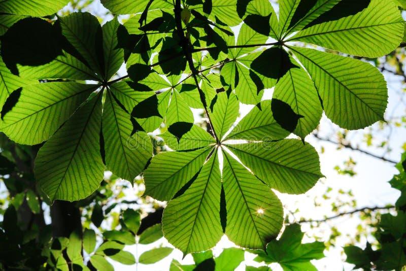 - zielone liście bright zdjęcie stock