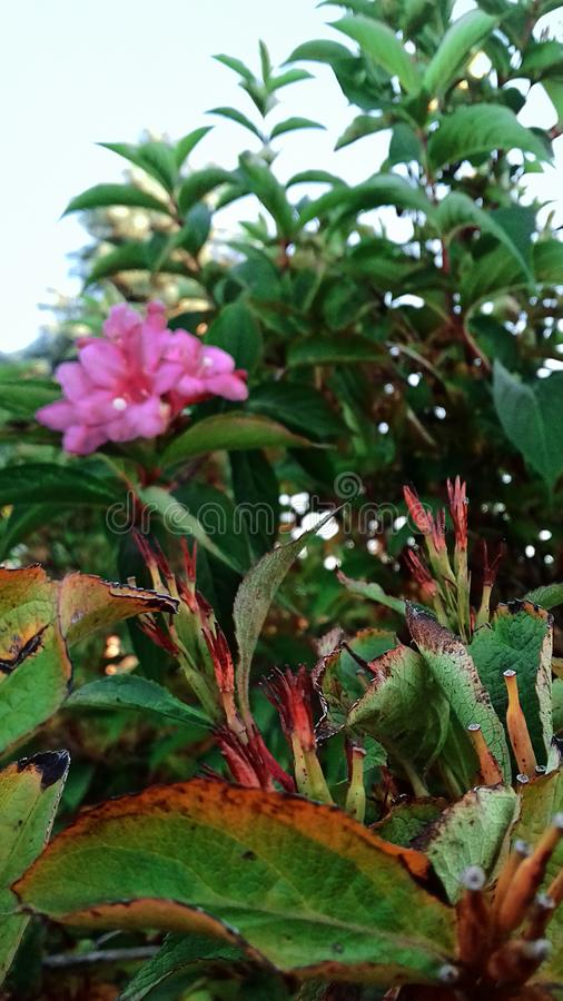 zielone liście lato ciepłe dni Końcówka lato Kwitnąć Bush obrazy stock