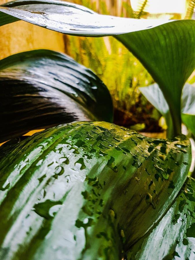 zielone liście mokre fotografia royalty free