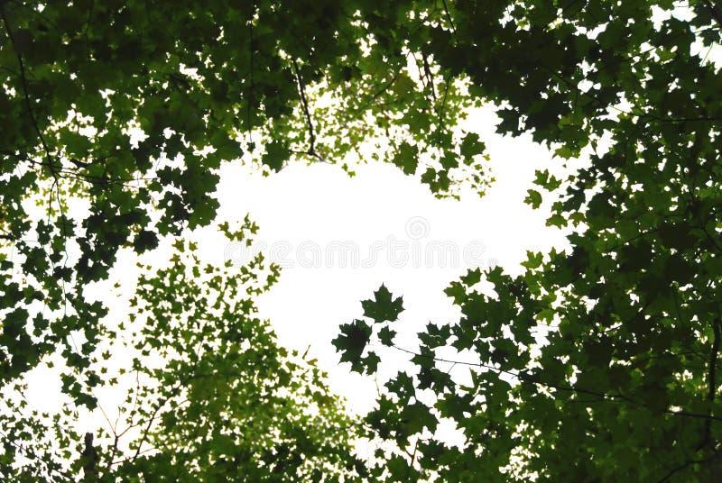 zielone liście ramowi zdjęcia royalty free