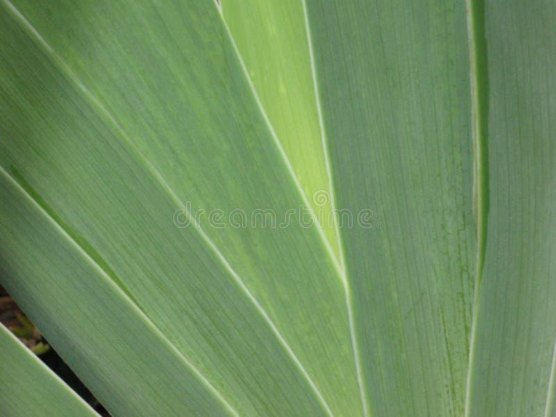 zielone liście tło zdjęcie royalty free