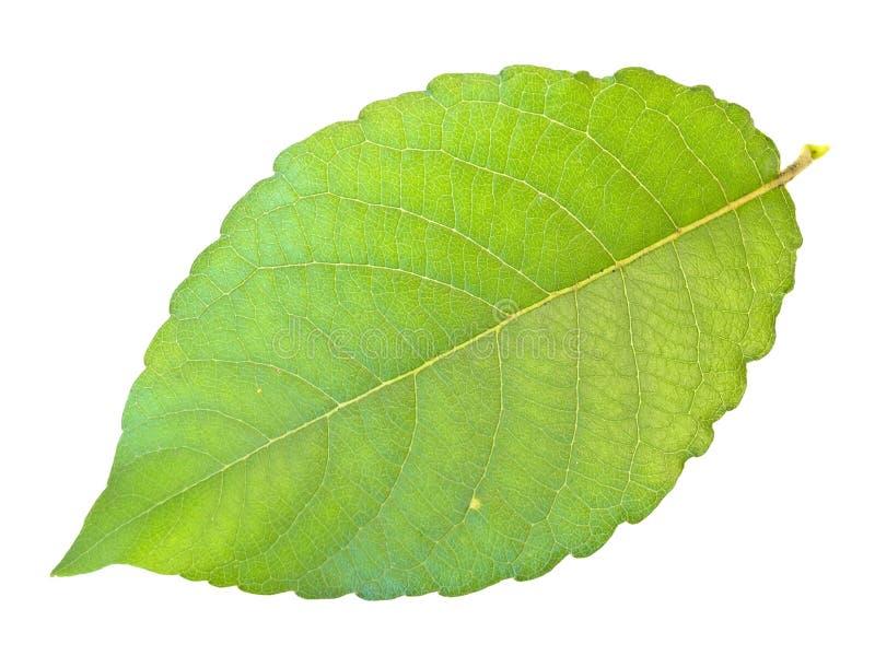 Download Zielone Liści, Zdjęcie Stock - Obraz: 5963220