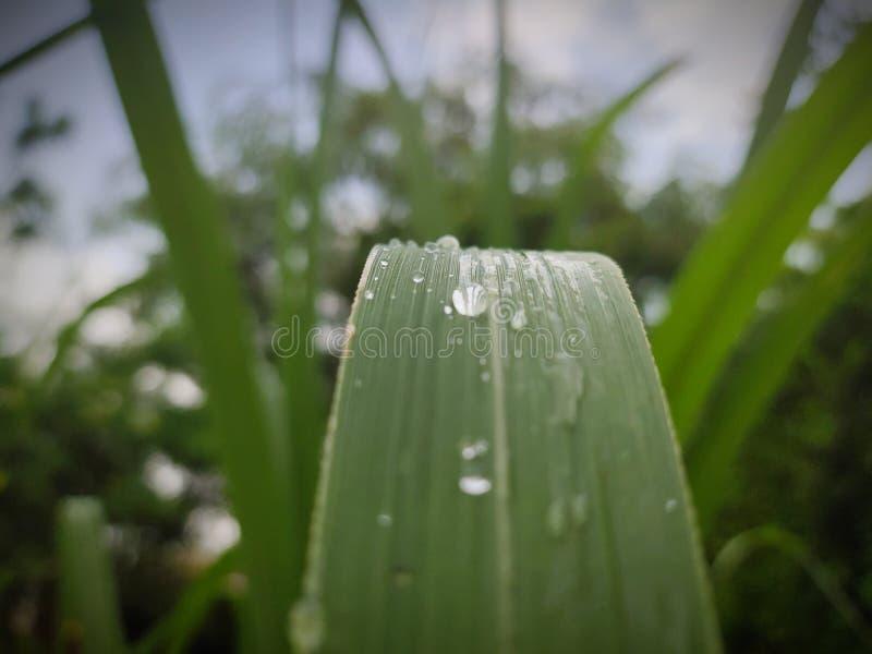 zielone li?ci kropli wody obraz stock