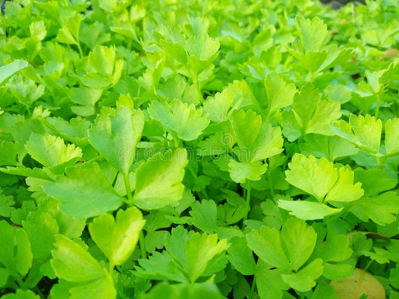 zielone li?ci t?o fotografia stock