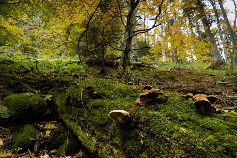 zielone moss grzyby fotografia stock