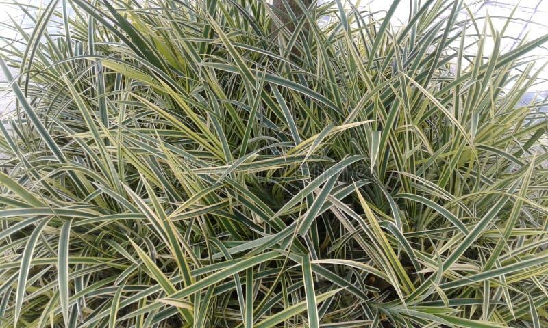 Zielone Obfitolistne las rośliny obrazy royalty free