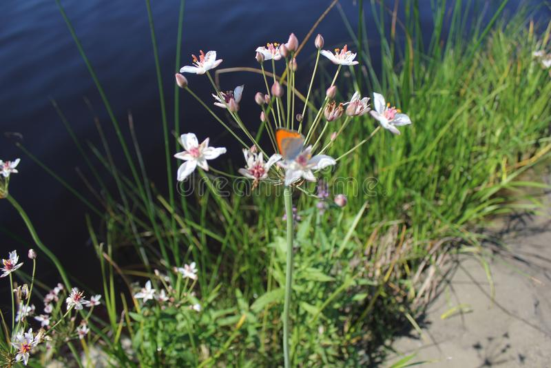 Zielone płochy blisko do jeziora 31200 i motyla fotografia stock