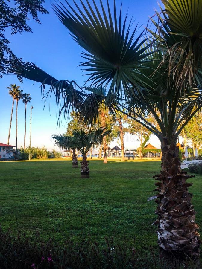Zielone palmy na trawie obrazy stock