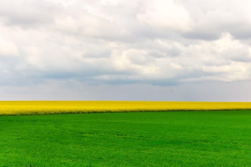 zielone pola żółty obraz royalty free