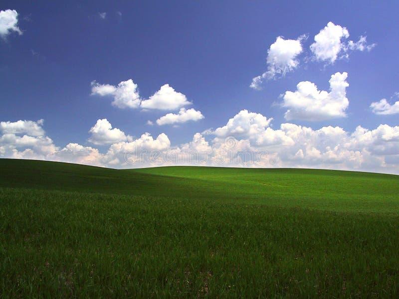 zielone pola zdjęcia royalty free