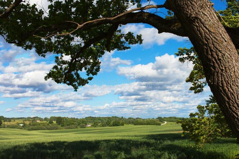 Download Zielone pola zdjęcie stock. Obraz złożonej z trawy, natura - 41955152